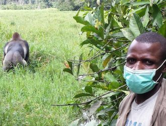 Researchers urge caution around wildlife to prevent spread of coronavirus