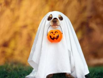 Searching for a job this October? There's no need to get spooked