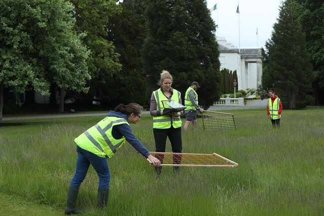 Researchers in high-vis jackets performing a biodiversity survey on the grounds of Áras an Uachtaráin.