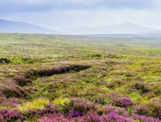 Scientists secure €6m to find pharma treasure trove in Irish bogs