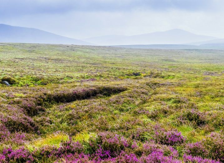 Lush, green bogland with purple flowers in the foreground.