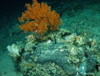 Researchers discover coral 'living on the edge' off Irish coast