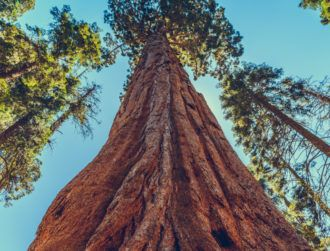 Sequoia setting down roots in Europe signals support for early growth