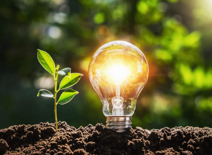 A lightbulb is resting on a tree branch surrounded by foliage with a small plant growing next to it.