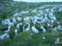Antibiotic properties unearthed in Northern Irish soil