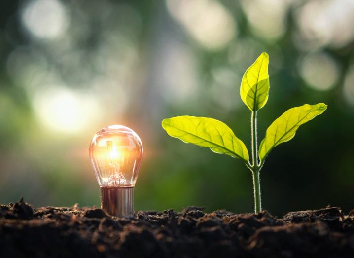 A lightbulb is sitting next to a budding plant in soil.