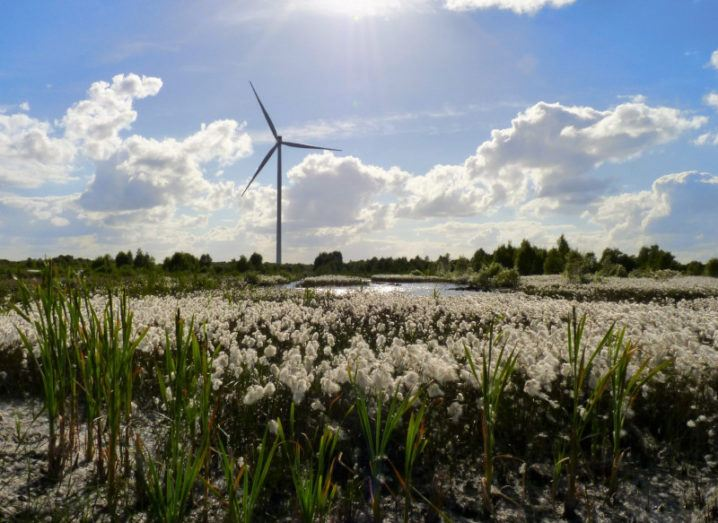 Photo of a bog with a wind turbine in the distance on a sunny day.