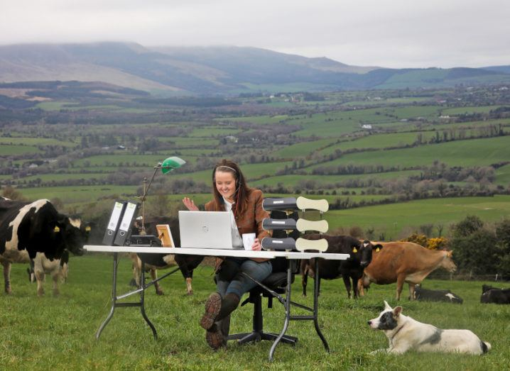A woman sits at a desk in the middle of a farm using a laptop, highlighting the use of agritech. There are cows around her.