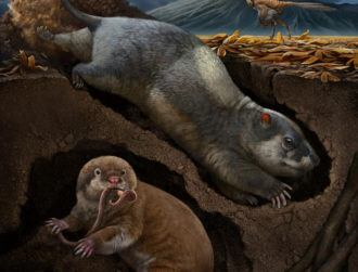 Scientists unearth ancient species of mammal-like burrowers
