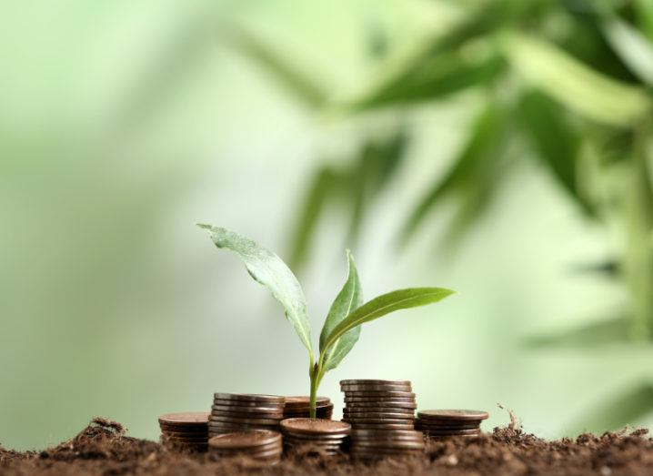 Stacked coins and a sapling on top of soil, symbolising seed funding.