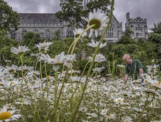 Irish universities among the world's 'best for sustainability'