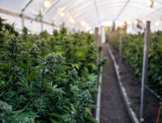 Greenheart CBD raises €4.5m to provide tech to hemp farmers