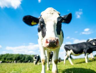 Project to make Irish dairy farms climate neutral wins €2m SFI prize