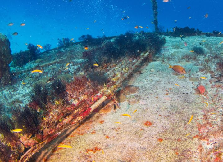A subsea cable covered in sea debris and plant life lying on the ocean floor. It's surrounded by colourful fish.