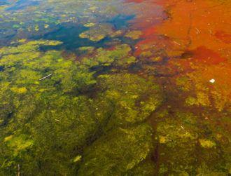 Scientists use AI-powered microscope to detect harmful algae in Irish waters