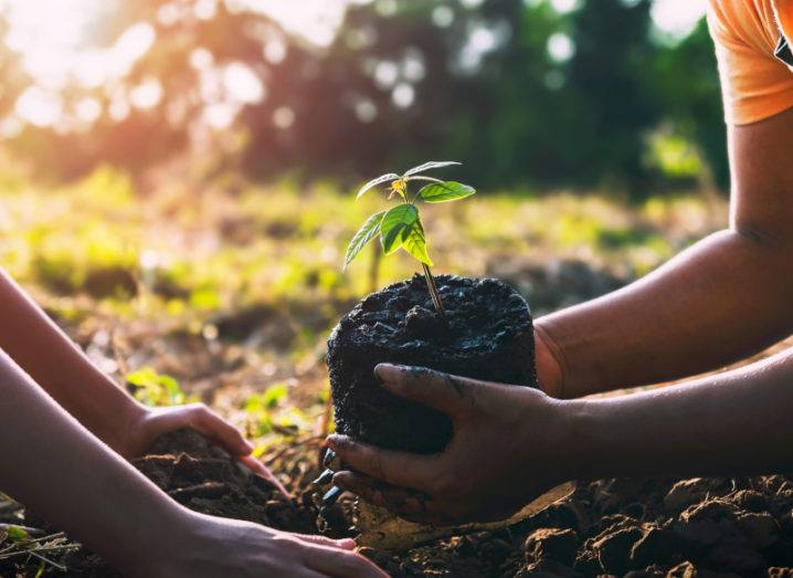 Shot of two pairs of hands planting plants in the ground in the evening sun.