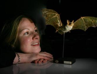 Bat poo in your garden? Researchers want to hear from you