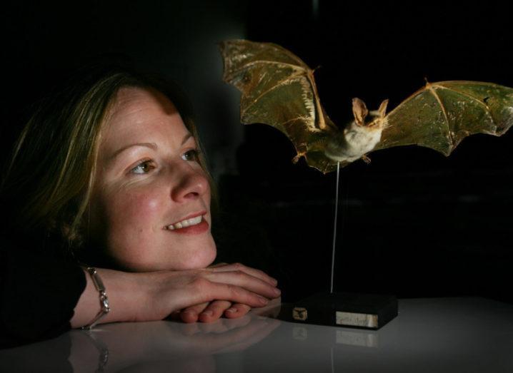Prof Emma Teeling, head of UCD's Batlab, staring at a model of a bat.