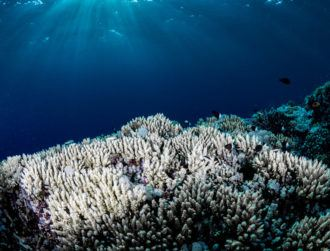 New probiotic treatment could help regenerate coral after bleaching events