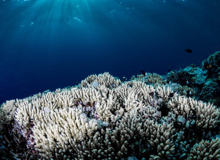 An example of coral bleaching is depicted as there is a large coral reef that has turned completely white. Coral bleaching is a result of global heating caused by the climate crisis.