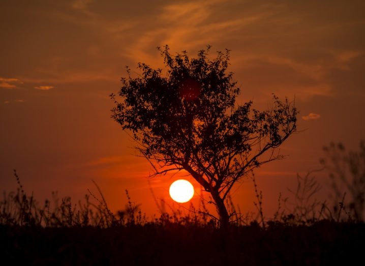 A silhouette of a tree and dry grass is pictured against a red sunset. The sky is mostly clear of clouds and the heat in the image looks unbearable, showing the reality of the climate crisis.