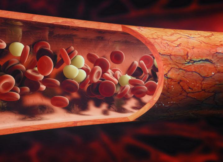 The inside of a vein is depicted. Red blood cells can be seen alongside white blood cells, flowing through the vein.
