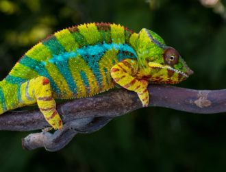 Robotic chameleon can move and change colour to its surroundings