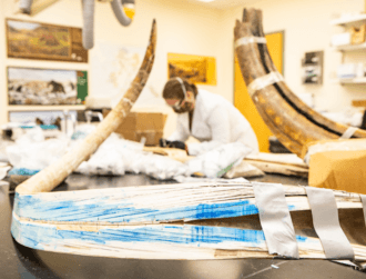Life of a woolly mammoth reconstructed using its 17,000-year-old tusk