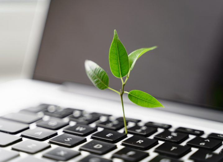 A stock photo of a green shoot emerging from a laptop keyboard.