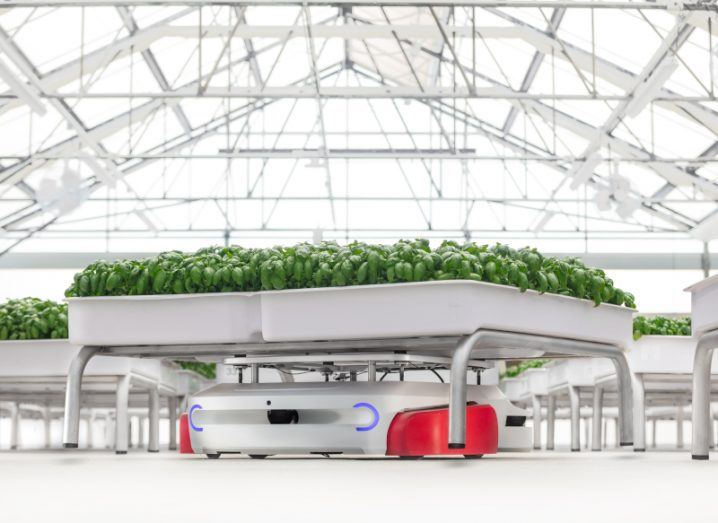 Produce growing in large white containers in an indoor farm. The containers are fitted with robotics that can move them around the space.