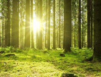 Yield Lab Europe leads funding for carbon footprint tracking start-up
