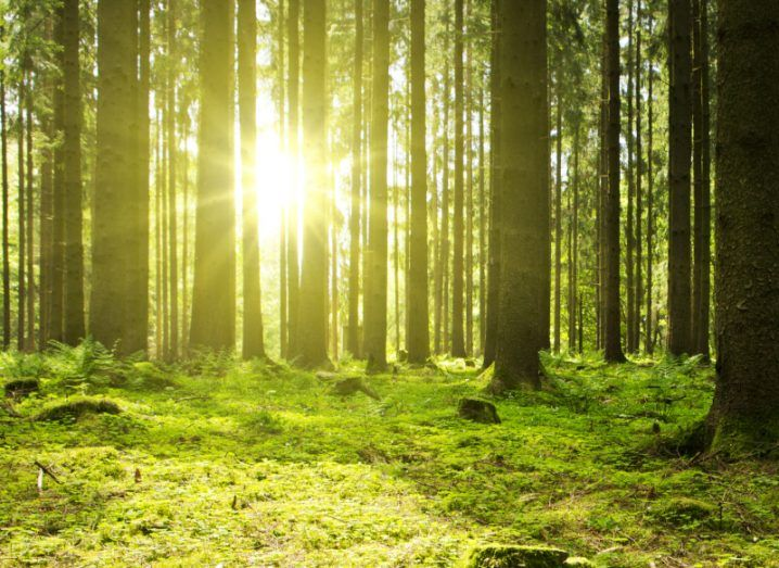Sunlight shining through trees in a forest with green foliage everywhere.