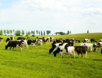 Limerick dairy research gets €14m funding to boost sustainability